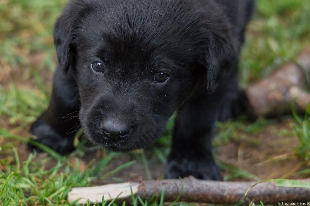It's puppie time!