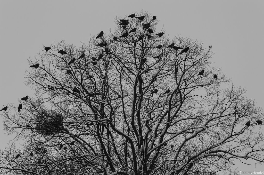 Ravenloft.