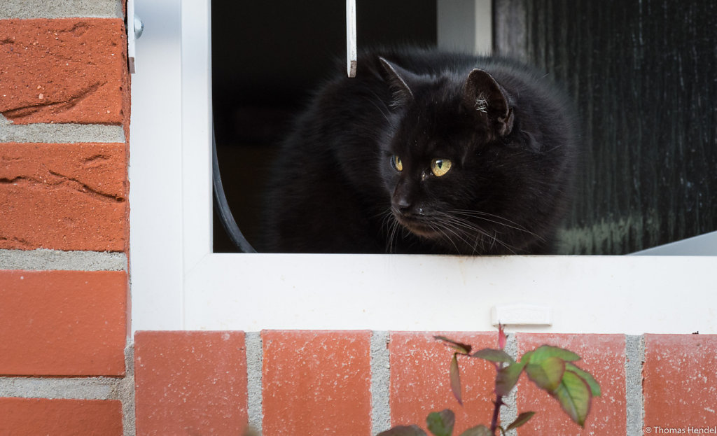 Black cat is watching you!
