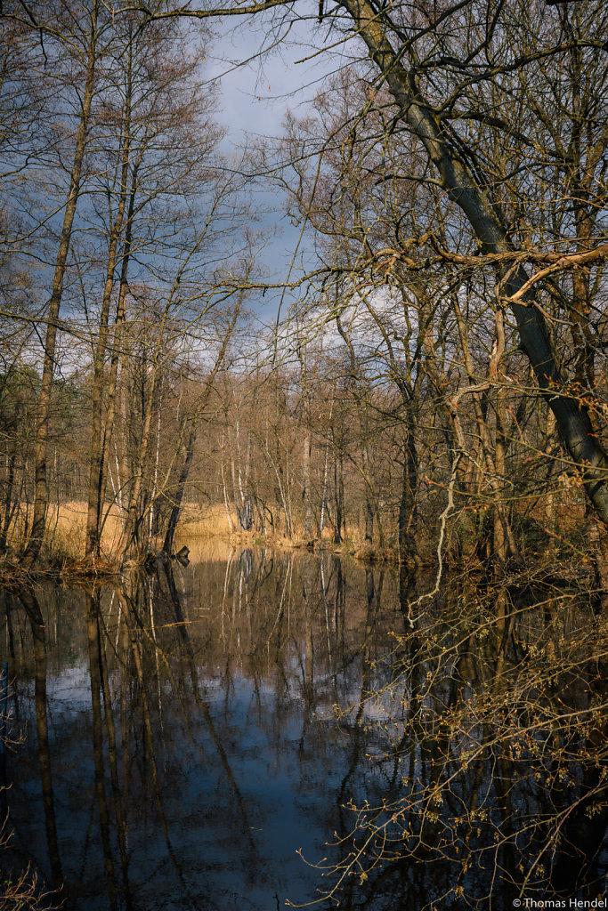 Mills pond.