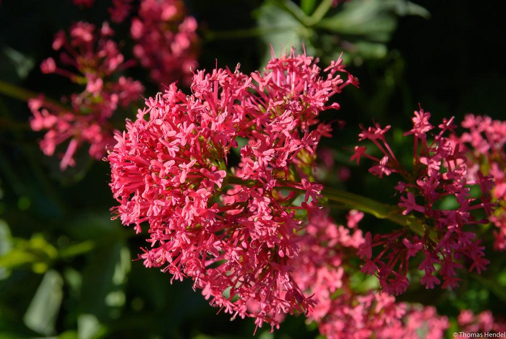 Pink swarm.