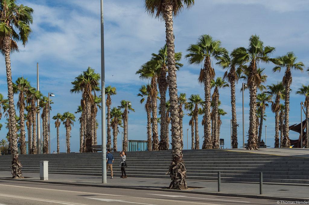 Tropical columns.